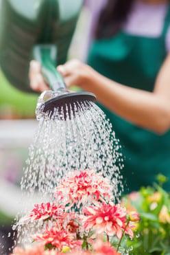 Woman watering flowers in garden centre