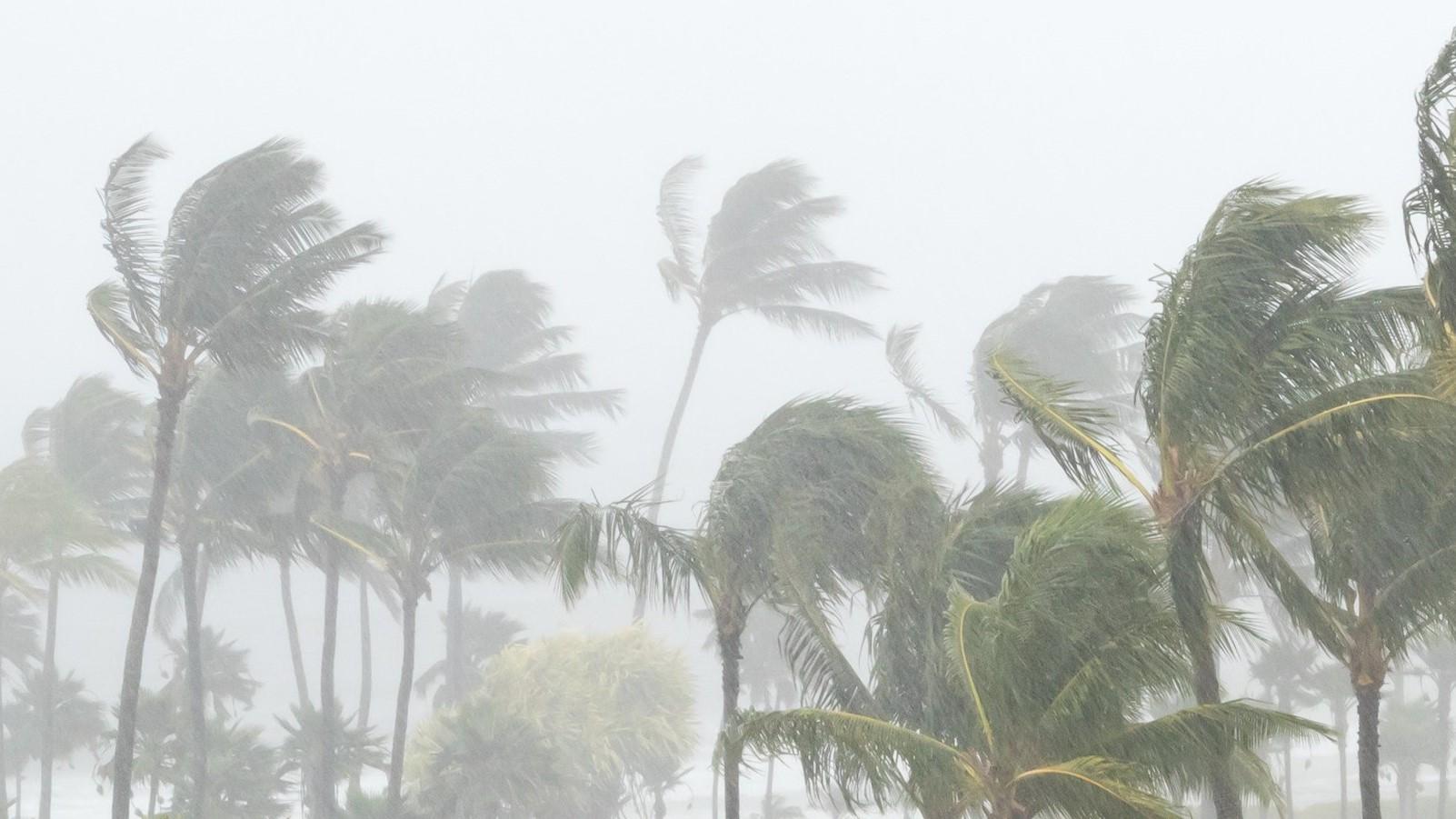 palm_trees_in_hurricane